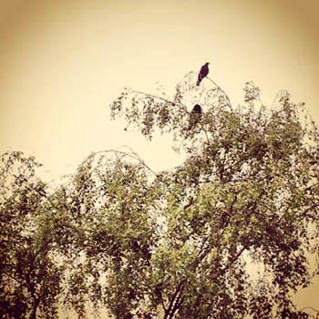 summer birds_edited-1